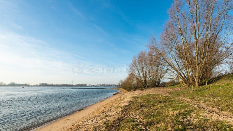 Árboles y arbustos desnudos a lo largo del río foto de archivo libre de regalías