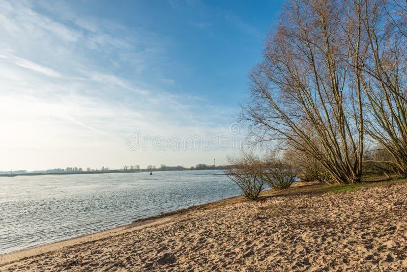 Árboles y arbustos desnudos a lo largo del río imágenes de archivo libres de regalías