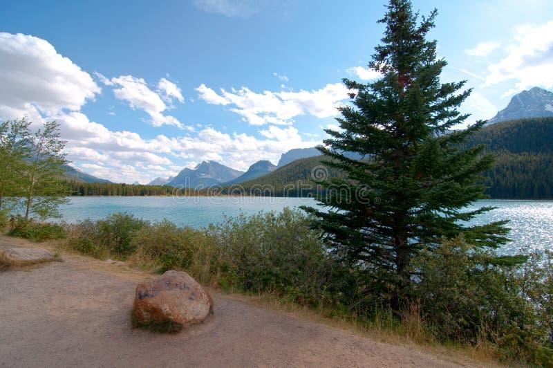 Árboles y arbustos a lo largo de la orilla del lago bow foto de archivo libre de regalías