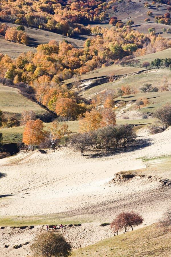 Árboles y arenas amarillos en desierto en la pradera de Inner Mongolia en Wulanbutong imagen de archivo