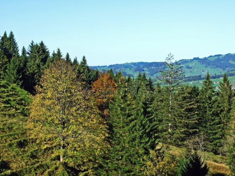 Árboles y bosques de las mezclas en la cordillera de Alpstein y en la región de Appenzellerland fotos de archivo libres de regalías