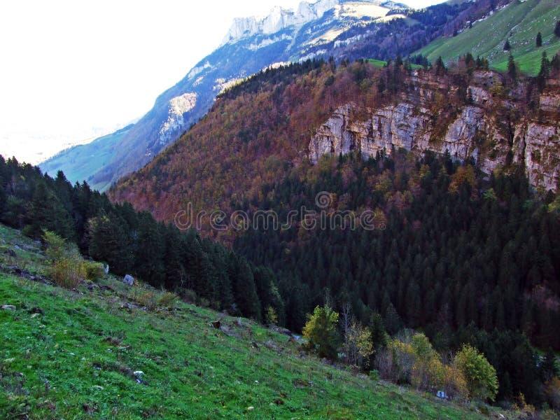 Árboles y bosques de las mezclas en la cordillera de Alpstein y en la región de Appenzellerland foto de archivo libre de regalías