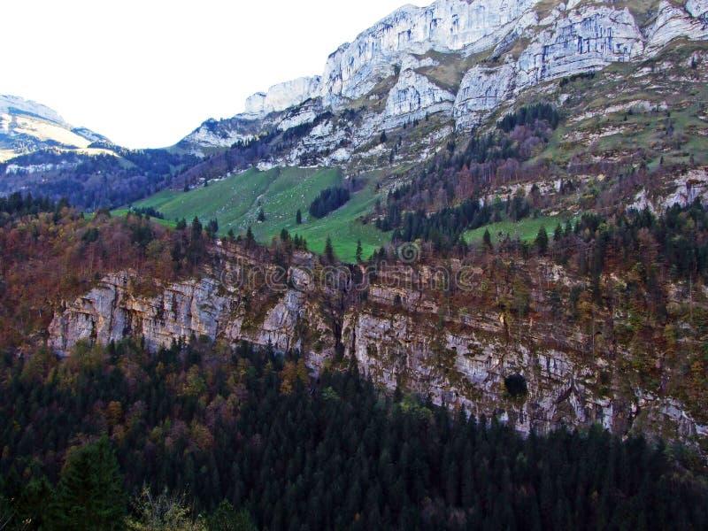 Árboles y bosques de las mezclas en la cordillera de Alpstein y en la región de Appenzellerland imágenes de archivo libres de regalías
