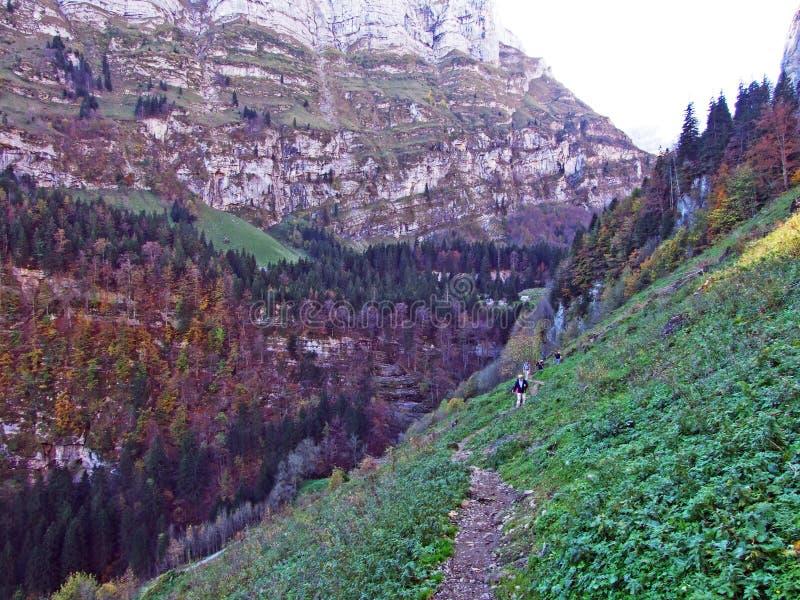 Árboles y bosques de las mezclas en la cordillera de Alpstein y en la región de Appenzellerland imagen de archivo libre de regalías
