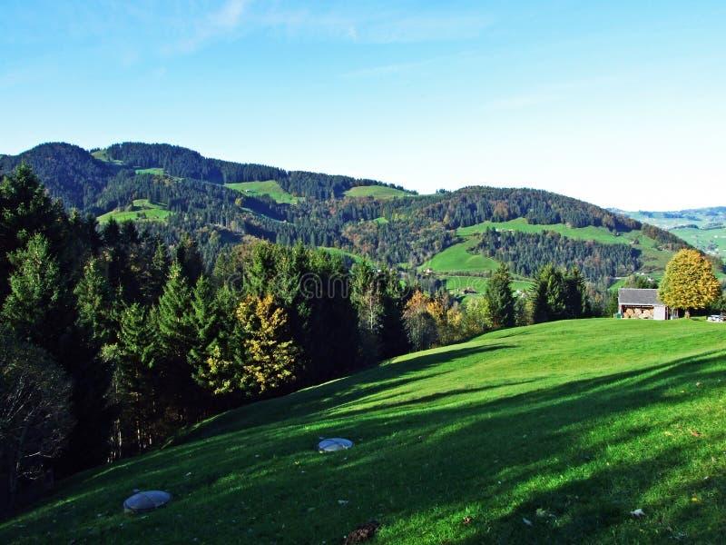 Árboles y bosques de las mezclas en la cordillera de Alpstein y en la región de Appenzellerland fotografía de archivo libre de regalías