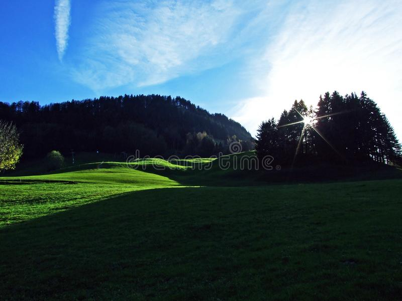 Árboles y bosques de las mezclas en la cordillera de Alpstein y en la región de Appenzellerland fotos de archivo