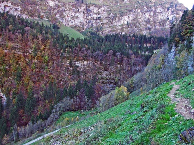 Árboles y bosques de las mezclas en la cordillera de Alpstein y en la región de Appenzellerland foto de archivo