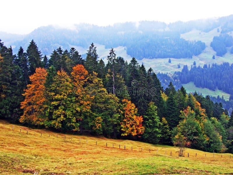 Árboles y bosques en la región de Obertoggenburg, Stein de las mezclas foto de archivo libre de regalías