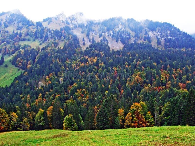 Árboles y bosques en la región de Obertoggenburg, Stein de las mezclas fotografía de archivo libre de regalías
