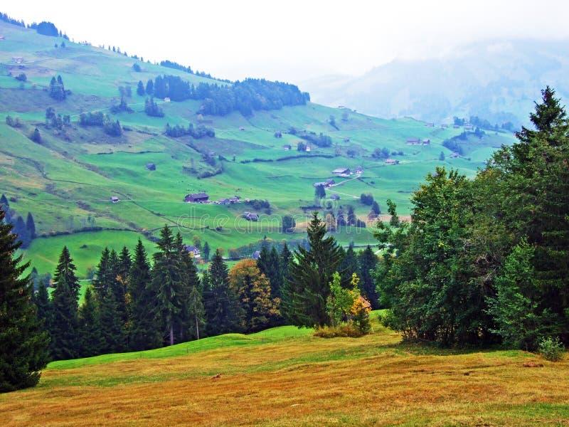 Árboles y bosques en la región de Obertoggenburg, Stein de las mezclas imagen de archivo libre de regalías