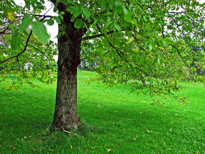 Árboles y bosques en la región de Obertoggenburg, Stein de las mezclas imágenes de archivo libres de regalías