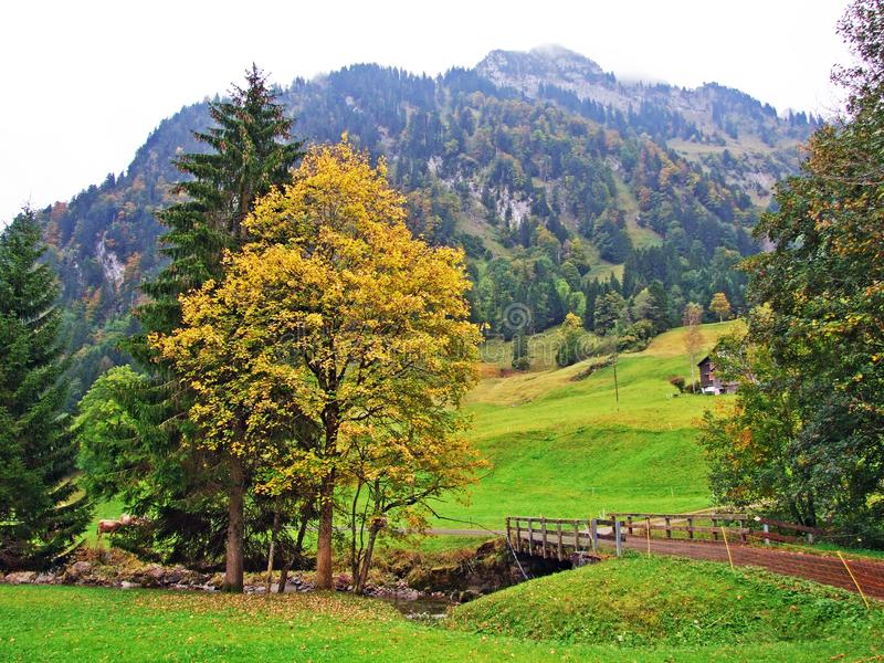 Árboles y bosques en la región de Obertoggenburg, Stein de las mezclas fotos de archivo