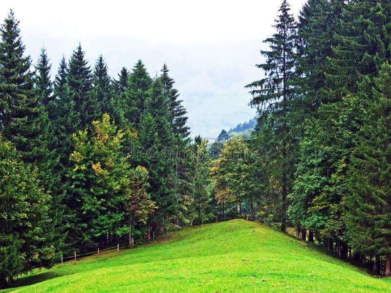 Árboles y bosques en la región de Obertoggenburg, Stein de las mezclas fotografía de archivo