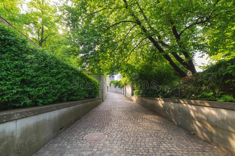 Árboles y calzada verdes naturales en el parque público, opinión de perspectiva hermosa de la planta de jardín al aire libre en l fotos de archivo libres de regalías