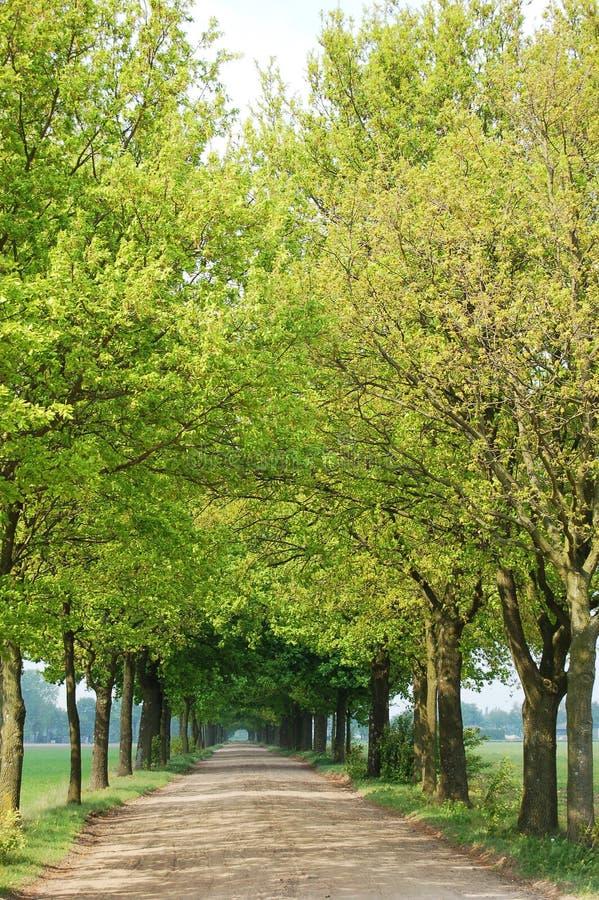 Árboles y camino fotos de archivo libres de regalías