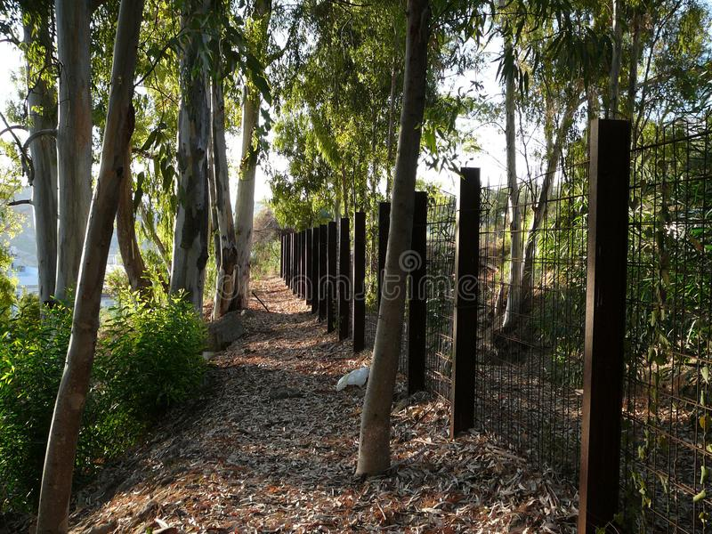 Árboles y cerca de eucalipto imágenes de archivo libres de regalías