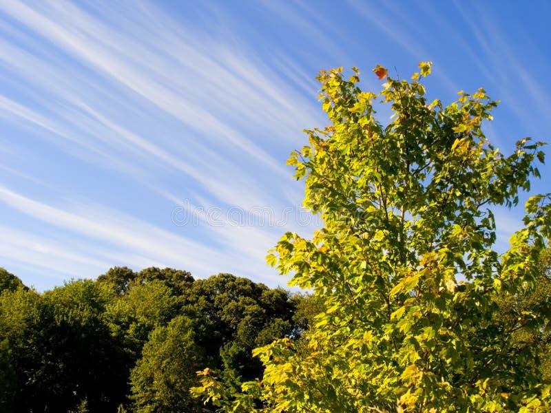 Árboles y cielo imagen de archivo libre de regalías