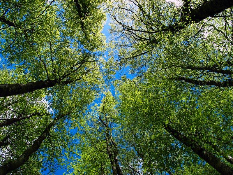 Árboles y cielo fotos de archivo libres de regalías