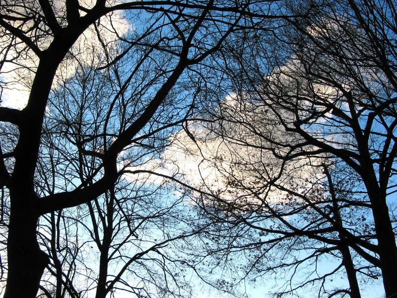 Árboles y cielo del invierno fotografía de archivo