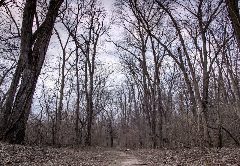 Árboles y cielo del molino del grano para moler de la cala del pino imagen de archivo