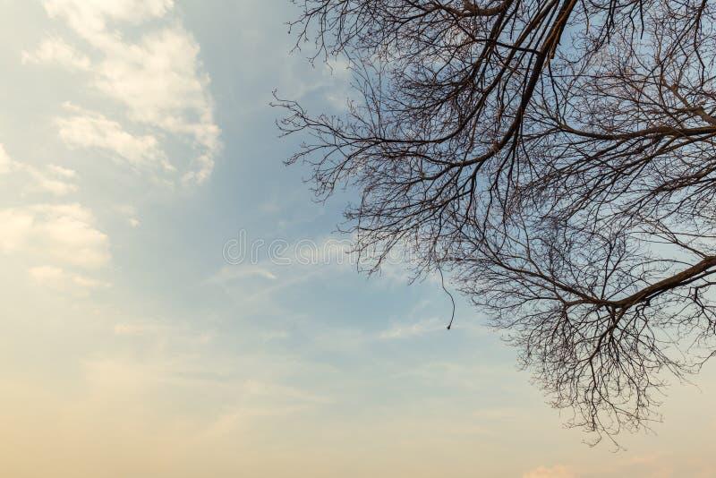 Árboles y cielo grandes abstractos de la puesta del sol fotografía de archivo libre de regalías