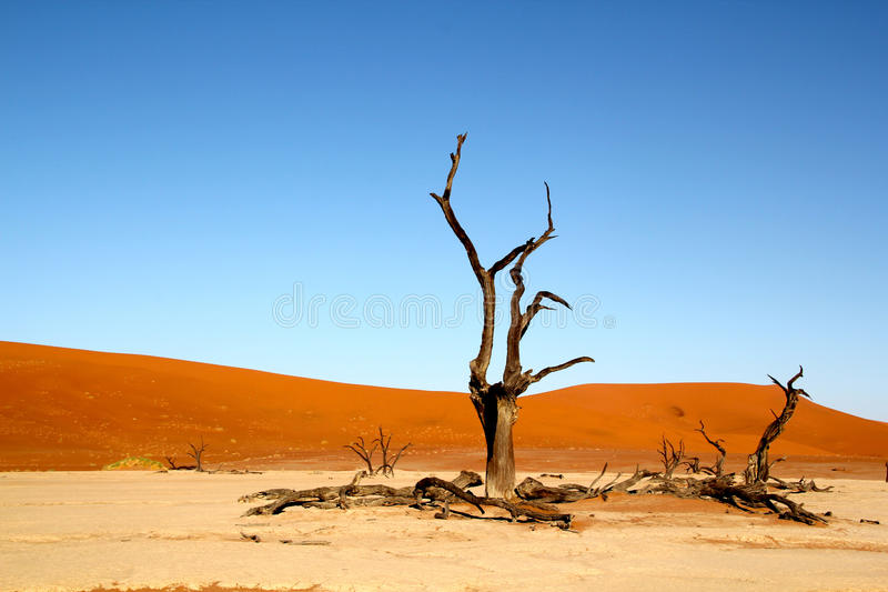 Árboles y dunas muertos en desierto fotos de archivo