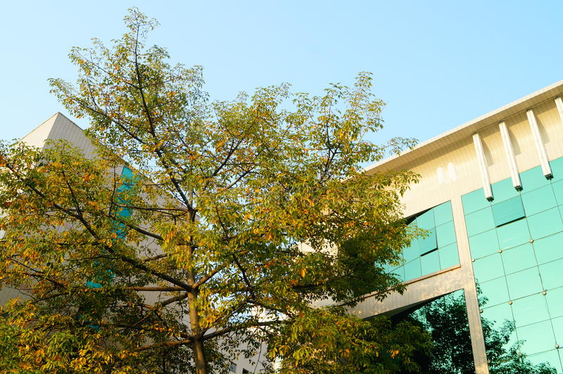 Árboles y edificios fotos de archivo libres de regalías