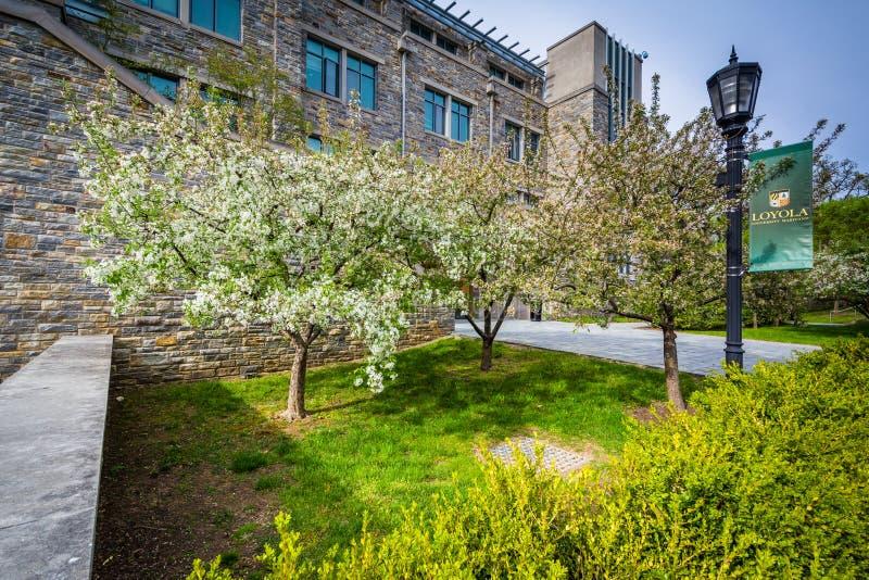 Árboles y edificios en Loyola University Maryland, en Baltimore, fotos de archivo libres de regalías