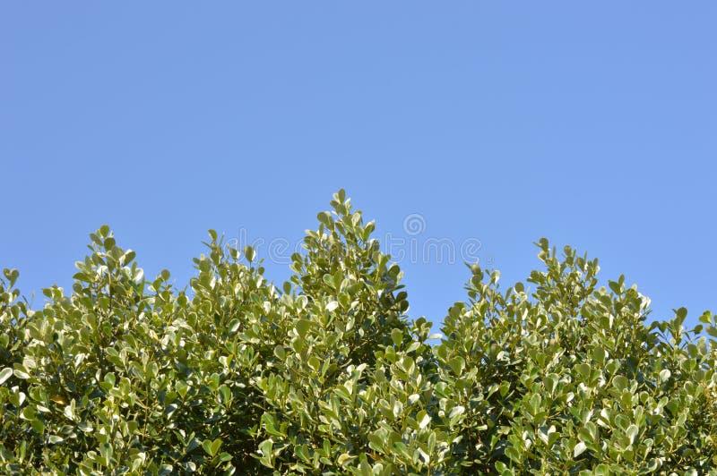 Árboles y el cielo azul imágenes de archivo libres de regalías