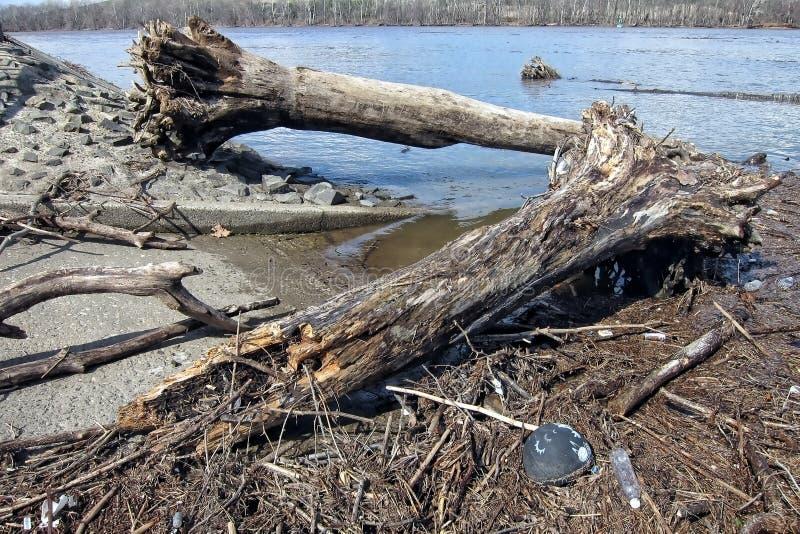 Árboles y escombros de madera después de la inundación del río de Delaware imagen de archivo libre de regalías