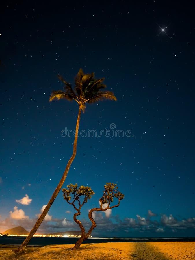 Árboles y estrellas foto de archivo