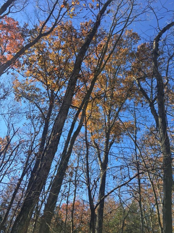 Árboles y hojas de la caída con el cielo azul fotos de archivo