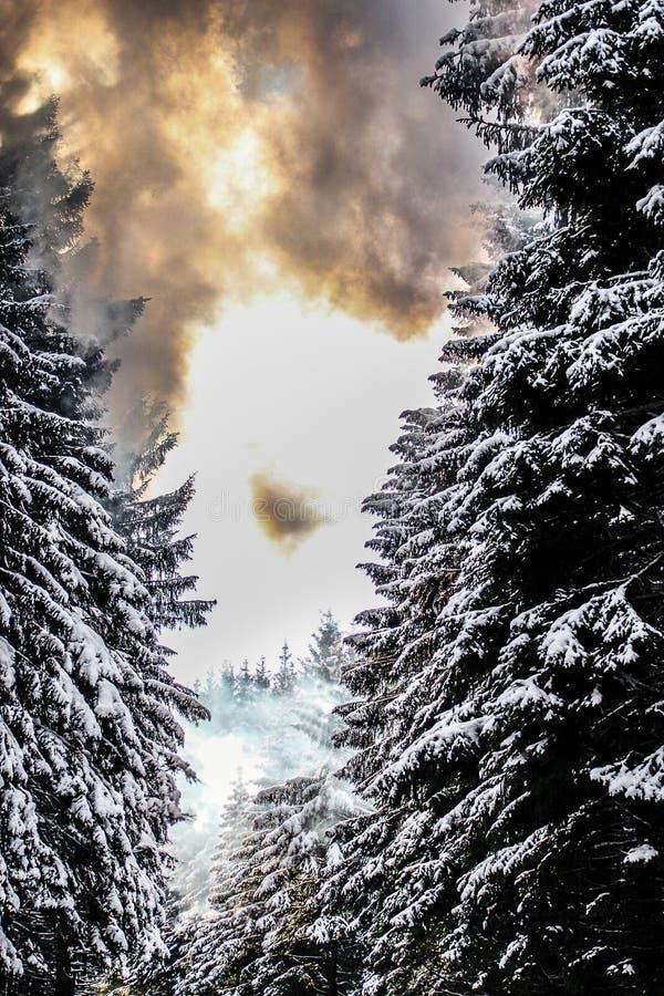 Árboles y humo Nevado imagen de archivo libre de regalías