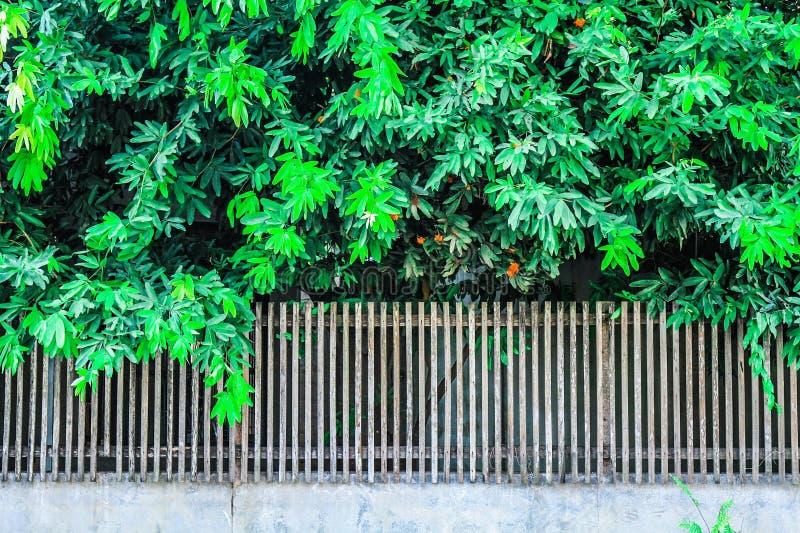Árboles y jardines en la cerca foto de archivo libre de regalías