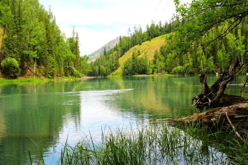 Árboles y lago foto de archivo libre de regalías