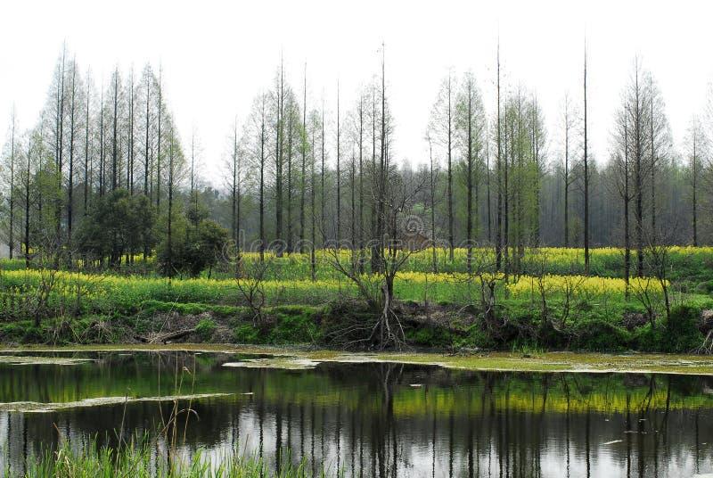 Árboles y lago fotos de archivo