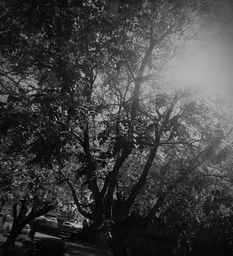 Árboles y luz del sol fotos de archivo