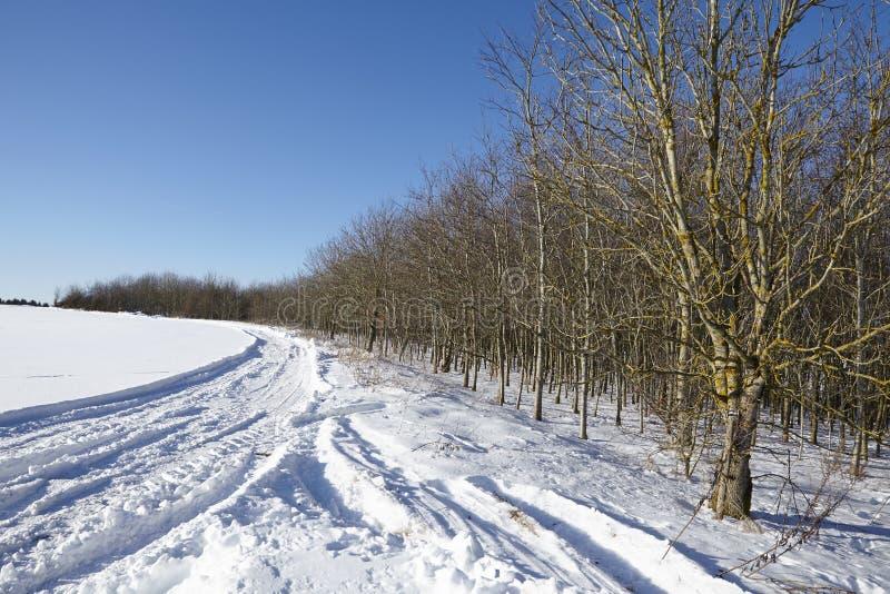 Árboles y marcas de resbalón calvos en un snowscape foto de archivo