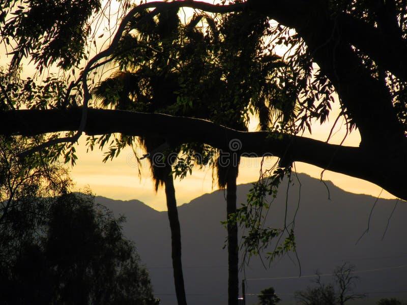 Árboles y montañas imagen de archivo libre de regalías