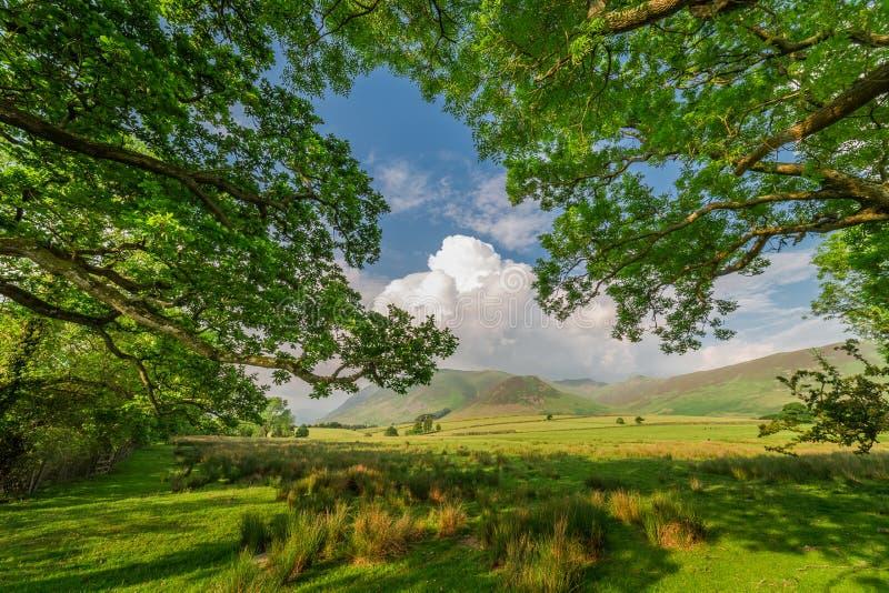 Árboles y montañas grandes verdes en el lago district fotografía de archivo