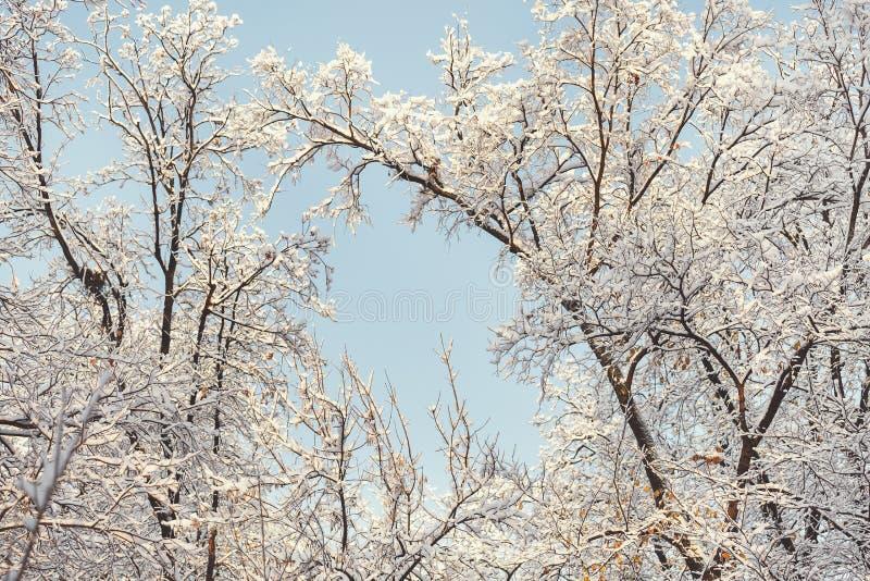 Árboles y nieve en un bosque fotografía de archivo libre de regalías