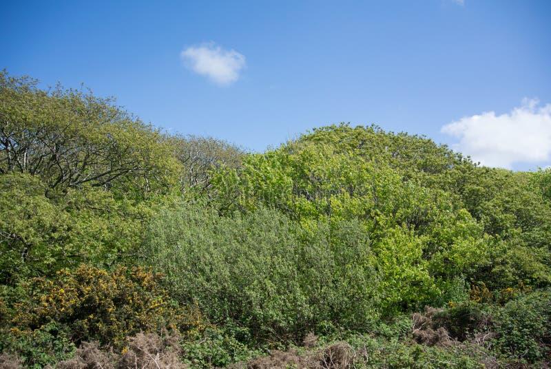 Árboles y paisaje de los arbustos contra el cielo azul imagenes de archivo