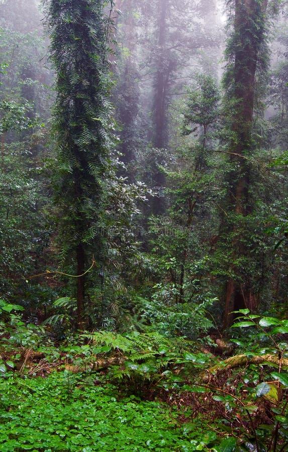 Árboles y plantas de la selva tropical fotos de archivo