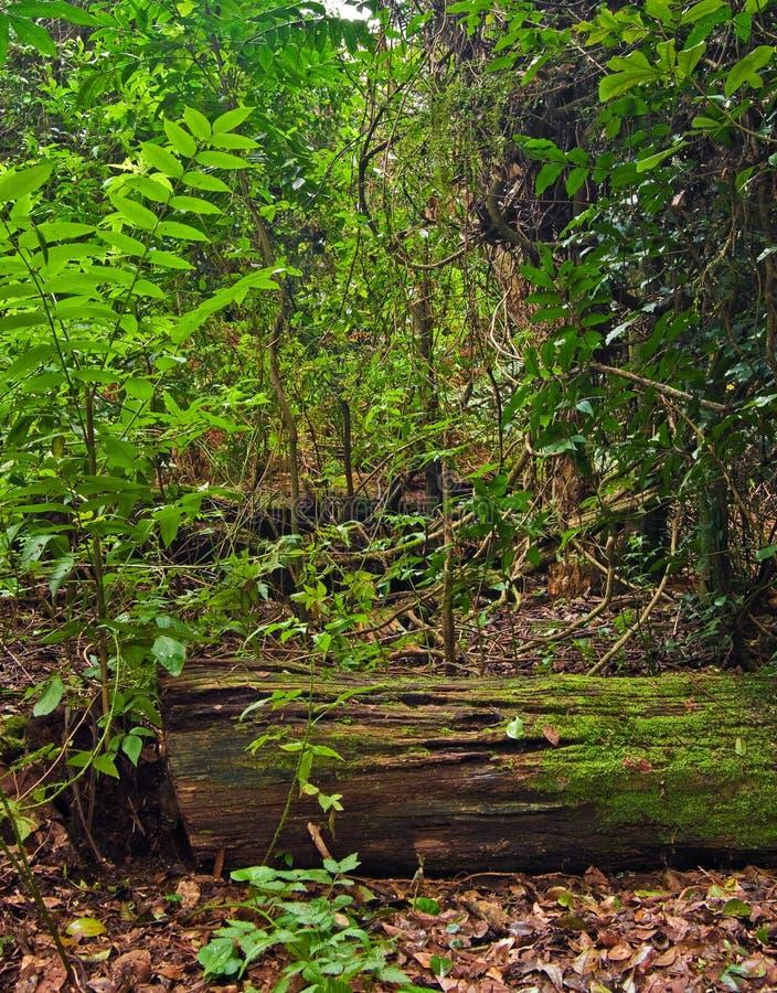 Árboles y plantas de la selva tropical fotografía de archivo