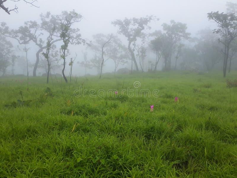 Árboles y prado con niebla por mañana imagenes de archivo