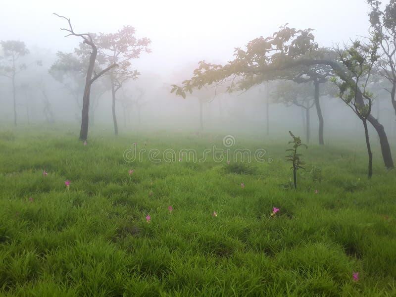 Árboles y prado con niebla por mañana foto de archivo