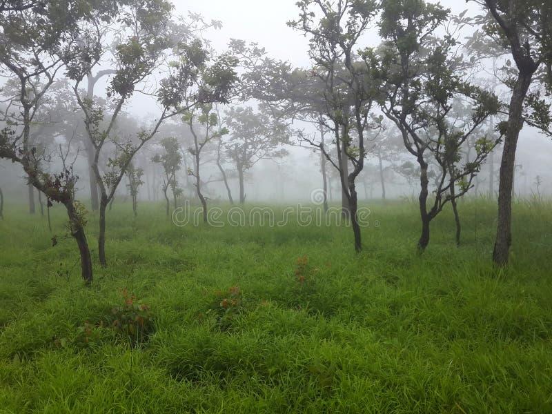 Árboles y prado con niebla por mañana fotos de archivo libres de regalías