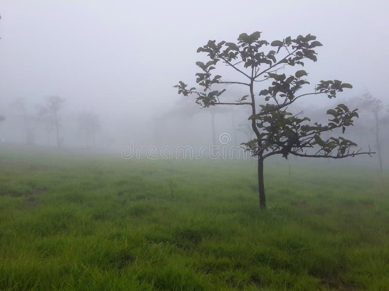 Árboles y prado con niebla por mañana imagen de archivo