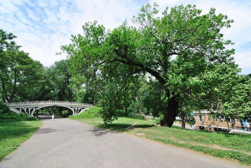 Árboles y puente de Central Park foto de archivo libre de regalías