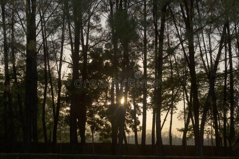 Árboles y puesta del sol en la pagoda de Linh Mu en Huê en Vietnam fotos de archivo